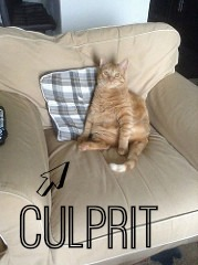 "Tripod kitty on a chair with an arrow labeled ""culprit"" pointing to him."