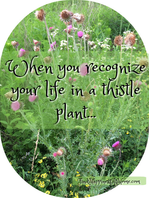 "Thistle with text,""When you recognize yourl ife in a thistle plant."""